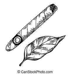 矢量, 煙草, 雕刻, 雪茄, 葉子