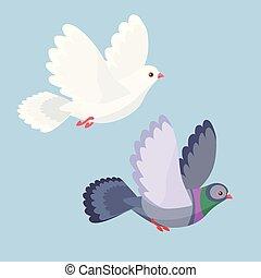 矢量, 鴿, 飛行, 鴿子, 插圖