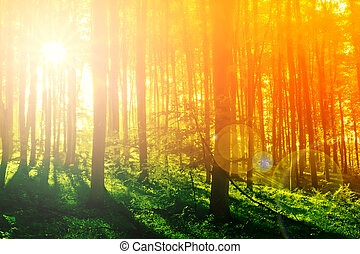 神秘, 鮮艷, 太陽, 早晨, 森林, 光線