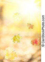 秋天, 下落的 葉子, 楓樹