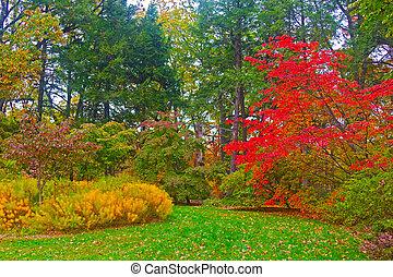 秋天, 國家, 我們, 樹木園