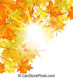秋天, 楓樹