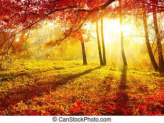 秋天, 樹, leaves., 秋天, park., 秋天
