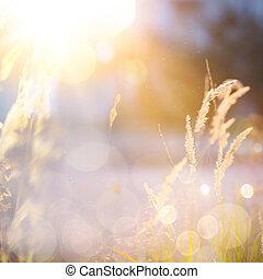 秋天, 藝術, 陽光普照, 背景, 自然
