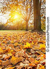 秋天, 陽光普照, 葉子