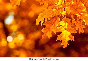 秋天, 非常, 淺的駐點, 離開