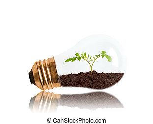 空間, 土壤, 裡面, 秧苗, 年輕, 光, 生長, 燈泡, 模仿, 在外