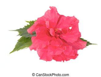 粉紅色, 芙蓉屬的植物, 花, 鮮艷