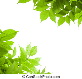 紫藤, 角度, 在上方, -, 頁, 綠色的背景, 葉子, 白色, 邊框, 離開