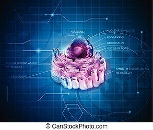 細胞, reticulum, 原子核, 內質