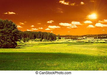綠色的天空, 森林, 領域, 紅色