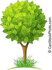 綠葉, 樹