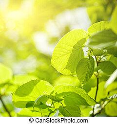 綠葉, 陽光普照, 背景