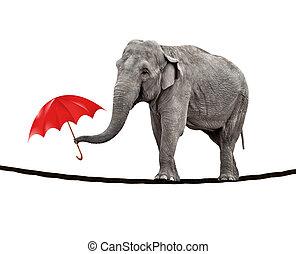 繃緊的繩子走, 大象