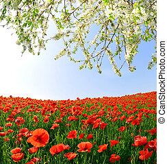 罌粟, 紅色, 領域
