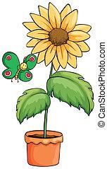 罐, 向日葵