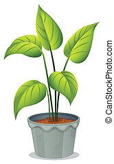 罐, 綠色的植物