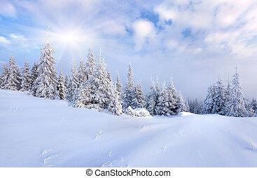美麗, 冬天, 樹。, 雪 被蓋, 風景