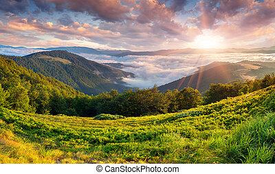 美麗, 夏天, 山。, 風景, 日出