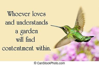 美麗, 大約, 花園, 漢語, 自然, 運動, throated, 諺語, 紅寶石, 蜂鳥