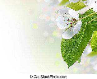 美麗, 春天, 邊框, 花