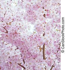 美麗, 花, 春天, 圖像, 高, 明亮, 鑰匙