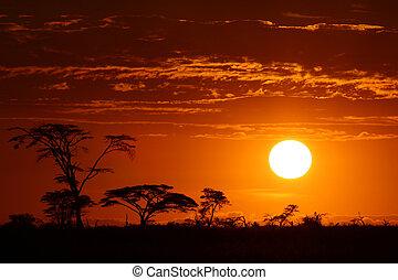 美麗, 非洲, 傍晚, 旅行隊