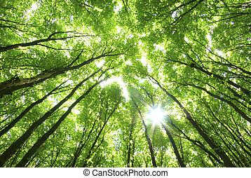 背景, 格林樹