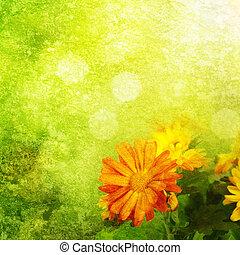 背景, 菊花, 植物