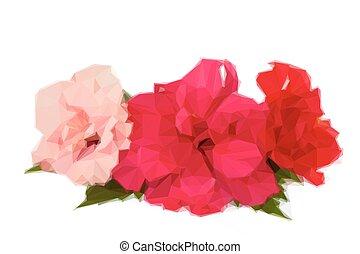 芙蓉屬的植物, 花, 邊框, 鮮艷
