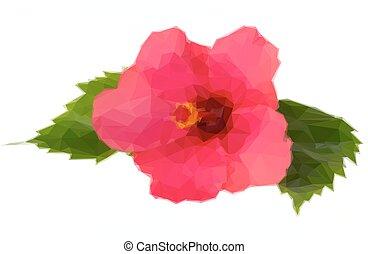芙蓉屬的植物, 花, 鮮艷, 紅色