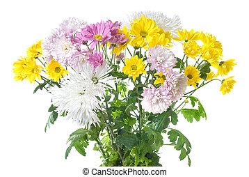 花束, 菊花, 白色, 被隔离