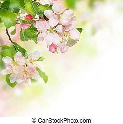 花, 春天, 邊框