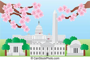 花, 櫻桃, 界標, 華盛頓特區
