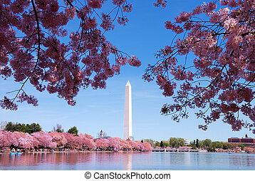 花, 櫻桃, 華盛頓特區