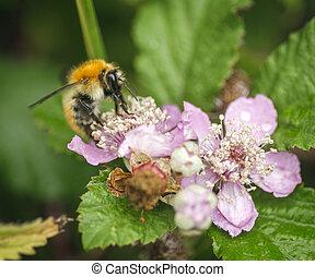 花, 蜜蜂