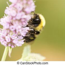 花, 蜜蜂, 自然