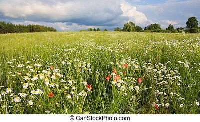 花, 領域, 風景, 夏天