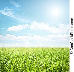 草地, 夏天, 風景