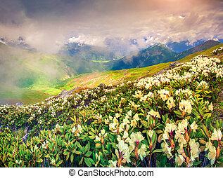 草地, 高加索, 阿爾卑斯山, 山。
