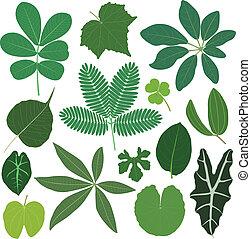 葉子, 離開, 植物, 熱帶