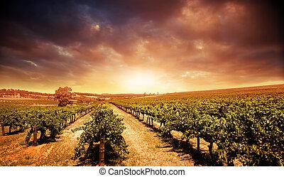 葡萄園, 傍晚