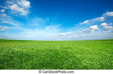 藍色的天空, 領域, 綠色, 在下面, 新鮮, 草