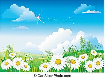 藍色的天空, chamomile