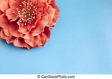 藍色的花, 菊花, 單個, 綠色的背景