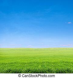 藍色, 在上方, 天空領域, 綠色的草