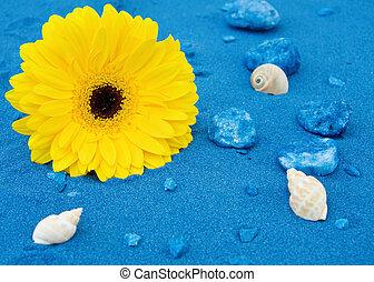 藍色, 沙, 黃色, 雛菊