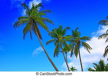 藍色, 背景。, 棕櫚, 天空, 樹