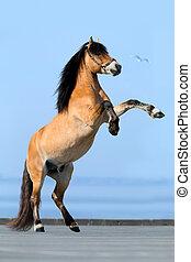 藍色, 背景。, 馬, reared