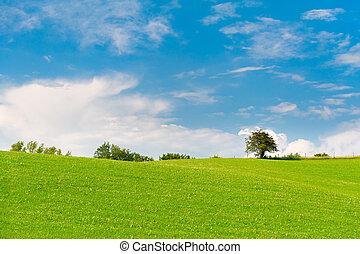 藍色, 草地, 天空, 樹, 綠色, 多雲, 地平線